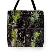 Ponderosa Pine Tote Bag