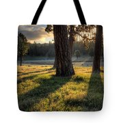 Ponderosa Pine Meadow Tote Bag
