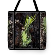 Ponderosa Pine Wide Tote Bag