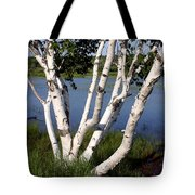 Pontook Birch Tote Bag