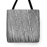 Poplars Beauty Trees Tote Bag