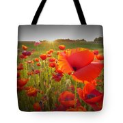Poppies At Sunset Tote Bag