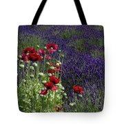 Poppies In Lavender Tote Bag