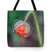 Popping Poppy Tote Bag