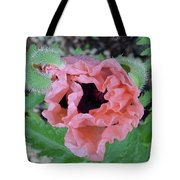 Poppy Opening - 2 Tote Bag