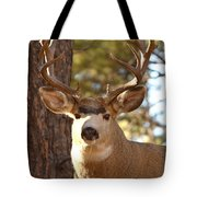 Portrait Of A 15-point Buck Tote Bag