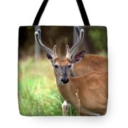 Portrait Of A Beautiful Buck  Tote Bag