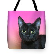 Portrait Of A Black Kitten Tote Bag