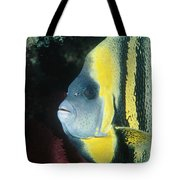 Portrait Of A Cortez Angelfish Tote Bag