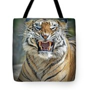 Portrait Of A Growling Tiger  Tote Bag