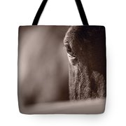 Portrait Of A Horse Kentucky Tote Bag