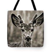 Portrait Of A Male Deer II Tote Bag