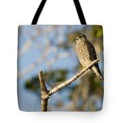 Portrait Of A Merlin Falco Columbarius Tote Bag
