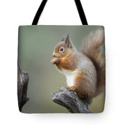 Portrait Of A Red Squirrel  Tote Bag