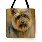 Portrait Of A Silky Terrier Tote Bag by Stephanie Calhoun