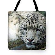 Portrait Of A Snow Leopard Tote Bag
