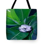 Portrait Of A Tree Frog Tote Bag