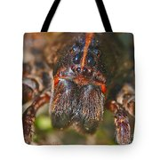 Portrait Of A Wolf Spider Tote Bag