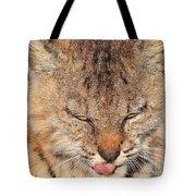 Portrait Of A Young Bob Cat 02 Tote Bag