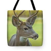 Portrait Of A Young Buck Tote Bag