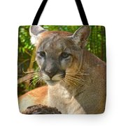Portrait Of A Young Florida Panther Tote Bag