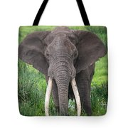 Portrait Of African Elephant Loxodonta Tote Bag