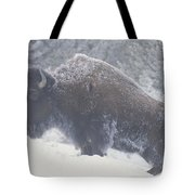 Portrait Of An American Bison Tote Bag