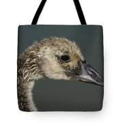 Portrait Of Month Old Canada Goose Gosling Tote Bag