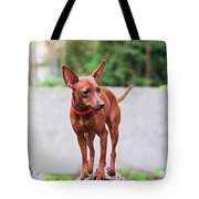 Portrait Of Red Miniature Pinscher Dog Tote Bag