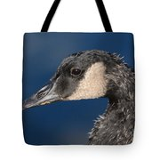 Portrait Of Young Canada Goose Tote Bag