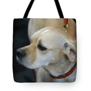 Portuguese Pointer Dog On A Leash Tote Bag