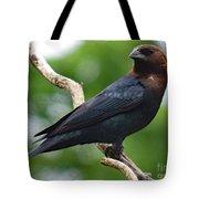 Posing Brown-headed Cowbird Tote Bag