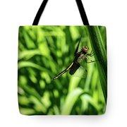 Posing Dragonfly 2 Tote Bag