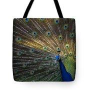 Posing Peacock Tote Bag