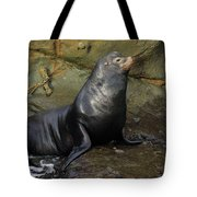 Posing Sea Lion Tote Bag