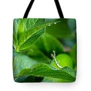Praying Mantis-1 Tote Bag