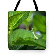 Praying Mantis-2 Tote Bag