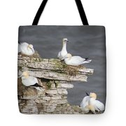 Precarious Nesting Bempton Gannets Tote Bag