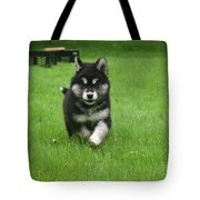 Precious Alusky Puppy Dog Running In A Yard Tote Bag