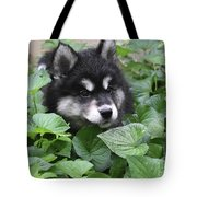 Precious Fluffy Alusky Puppy Dog In Green Foliage Tote Bag