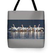 Preening Pelicans Tote Bag