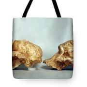 Prehistoric Skulls Tote Bag