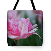 Pretty Candy Striped Pale Pink Tulip In Bloom Tote Bag