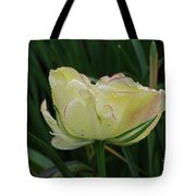Pretty Cream Colored Tulip Edged In Red With Dew Tote Bag