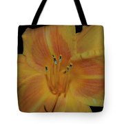 Pretty Orange Daylily Flowering With Pollen On It's Stamen Tote Bag