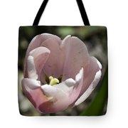 Pretty Pink Tulip Squared Tote Bag