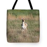 Pretty Pronghorn On The Plains Tote Bag