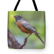 Pretty Robin Tote Bag