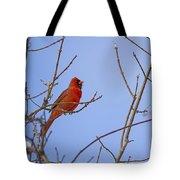 Primary Colours - Northern Cardinal - Cardinalis Cardinalis Tote Bag