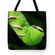 Privet Hawk Moth Caterpillar Tote Bag